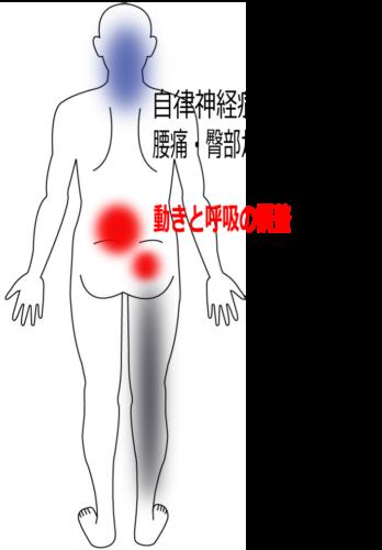 腰痛・臀部から下肢のしびれの鍼灸施術症例画像
