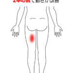 肉離れの症例2|愛知県一宮市の鍼灸院|堀田治療院