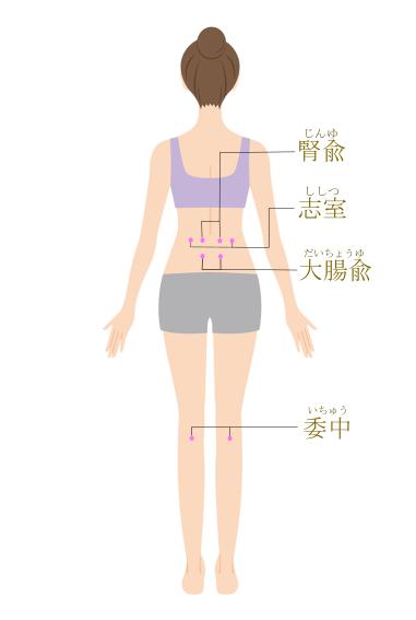腎兪・志室・大腸兪・委中のツボ位置イラスト